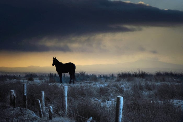 A horse stands against the wind as snow falls on Black Mountain in Belfast, Northern Ireland. Weather warnings had been issued for freezing temperatures across Britain as a cold front approached bringing high winds and gales