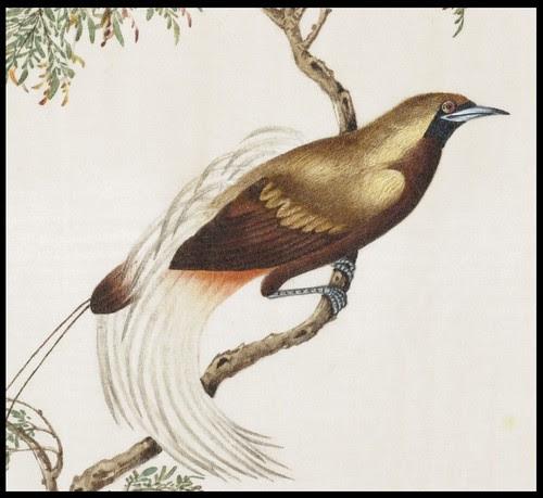 Bird Album i (detail)