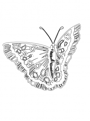 Amazing Butterfly Coloring Pages