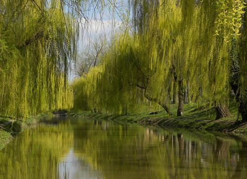 River of the peace por IceSpirit92