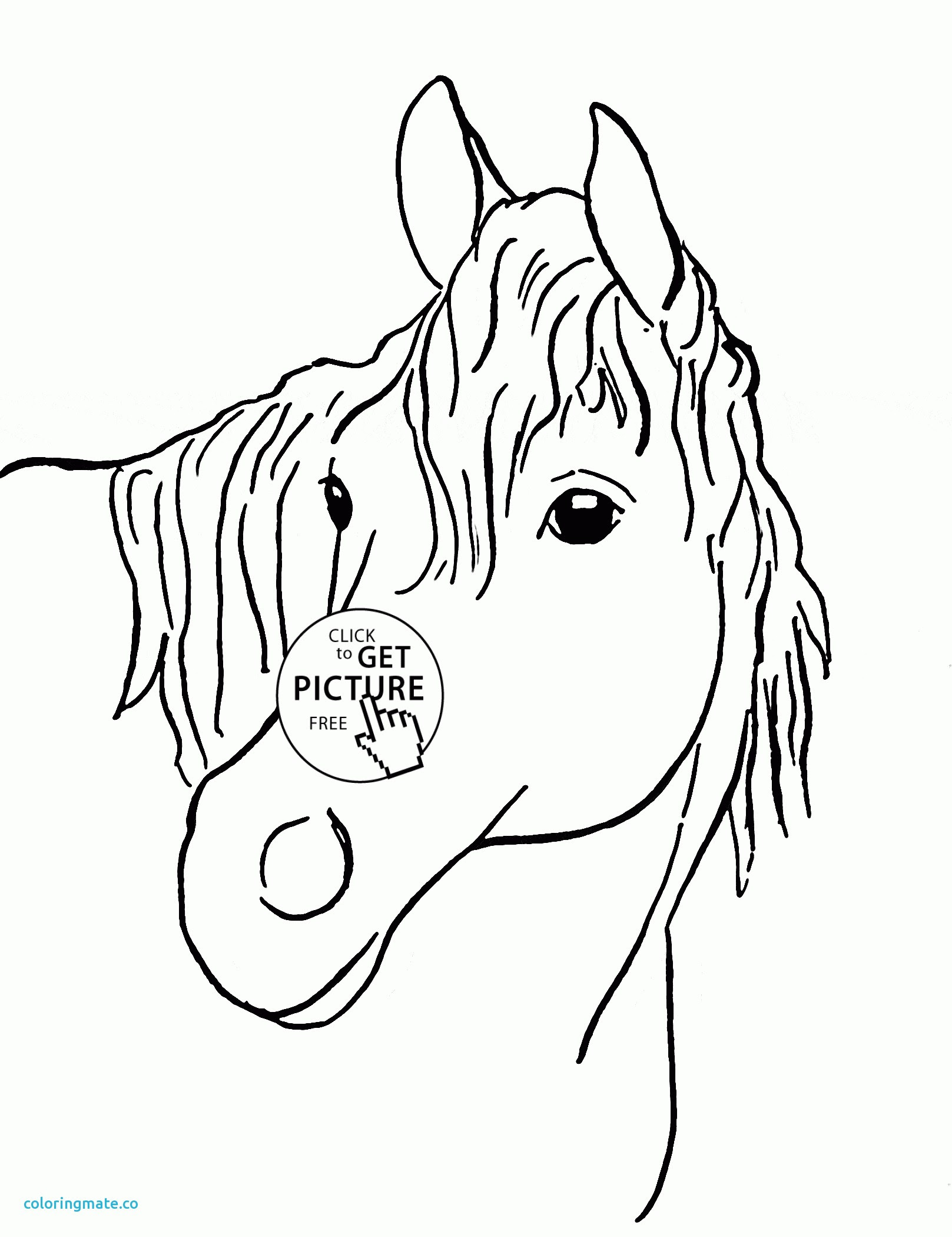 Horse Face Drawing at GetDrawings | Free download