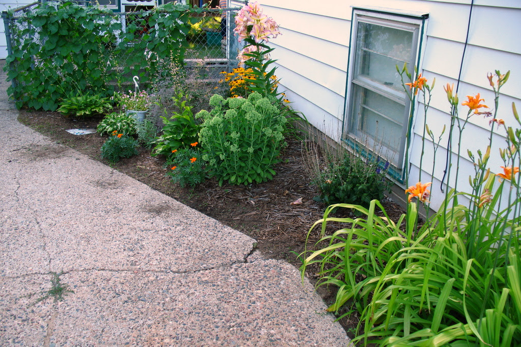wide photo of my flower garden