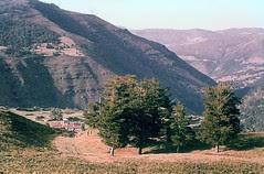 Garabandal Pines 2