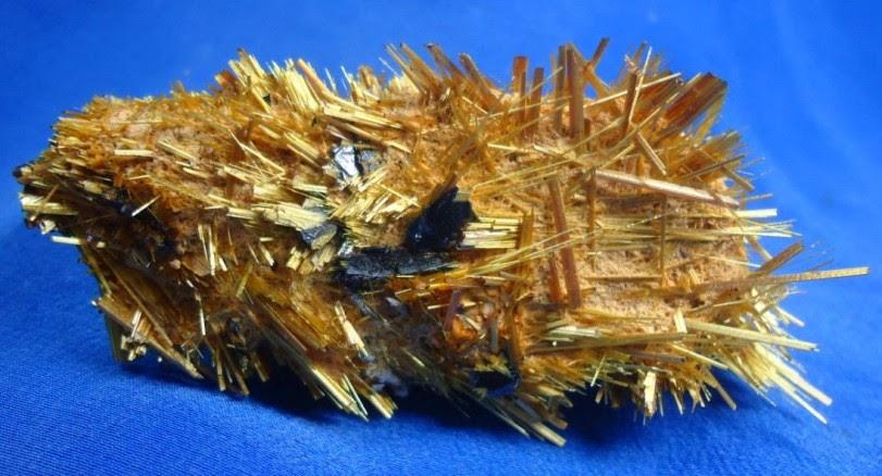 rutilio-dourado
