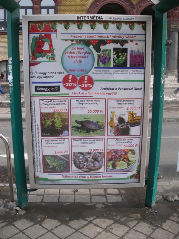 boycott, Auchan, bojkott, bojkottáld, Dunakeszi, láp, vicces, természetvédelem, fuck Auchan, hypermarket, multi, multinacionális, Blaha Lujza tér, reklám, antireklám, nem Kétfarkú Kutya párt