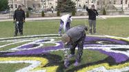 Ravens painting the city purple