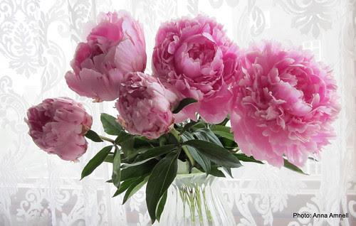 Kukkia 017
