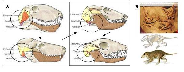 evolucion_i.JPG