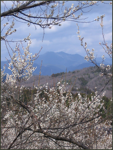 11 plum spring and mountains