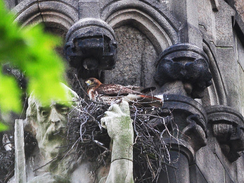 Isolde Prepares to Feed the Babies