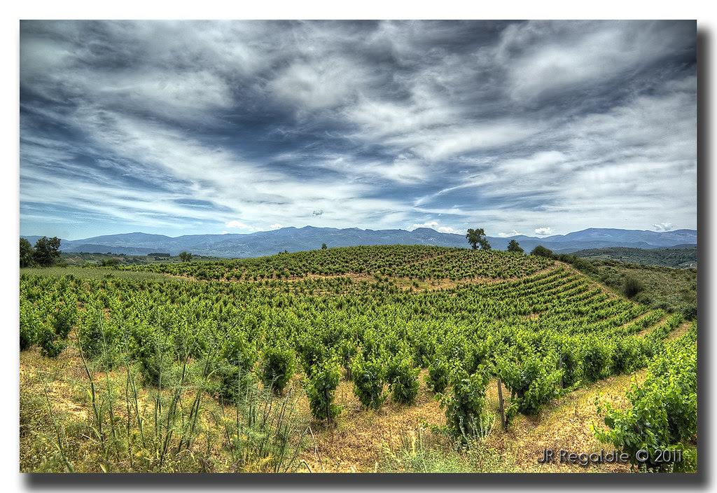 ... y más viñas by JR Regaldie Photo