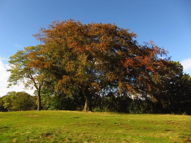 Trees on the Tumulus Field