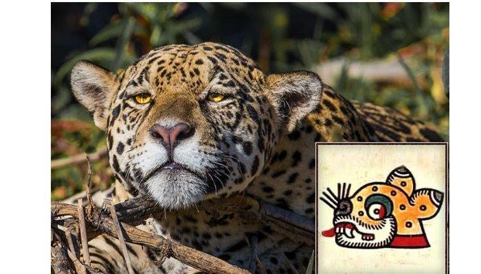 Jaguar Aztec Symbol