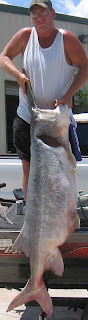 Monster paddlefish is just shy of setting a new state record in Oklahoma.