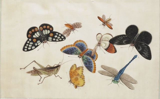 gorgeous watercolour drawing of insects