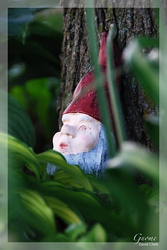 A painted metal gnome, hiding in foliage