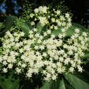 plantas multifuncion