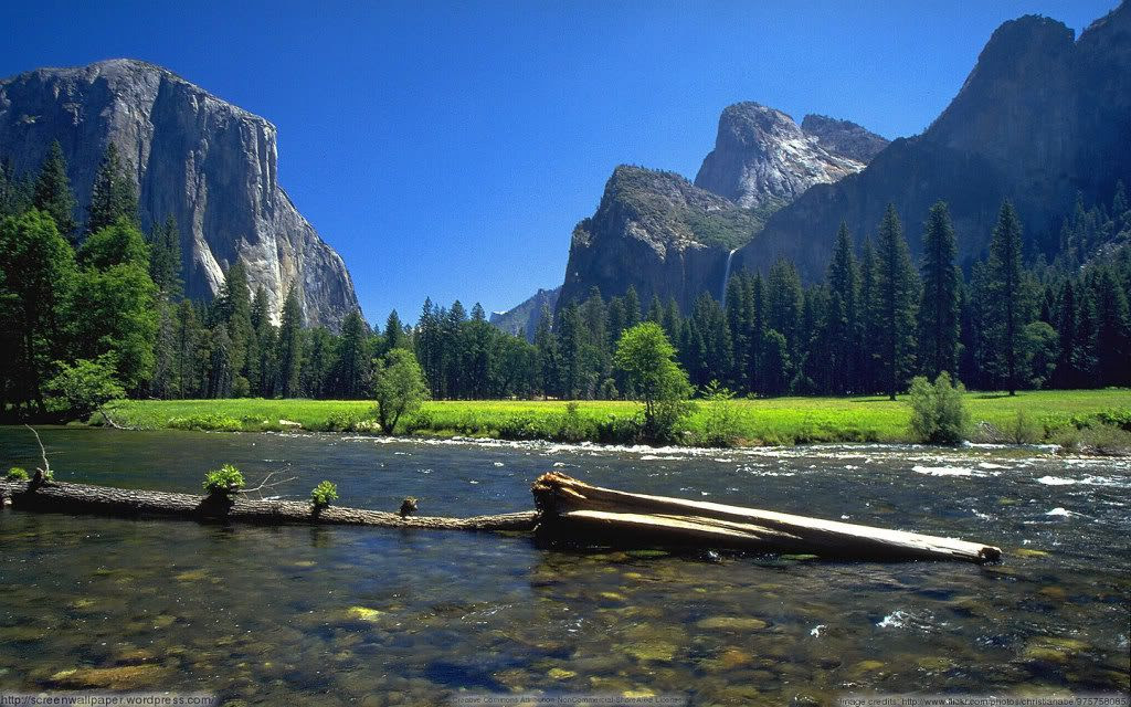 An Iconic Image of Yosemite National Park
