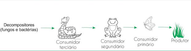 Exemplo de cadeia alimentar (Foto: Colégio Qi)