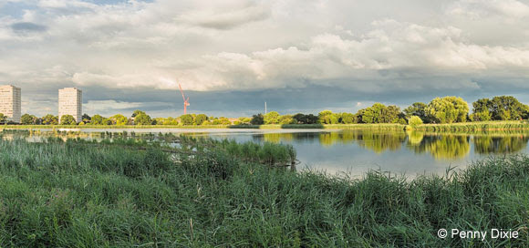 Woodberry Wetlands (credit Penny Dixie)