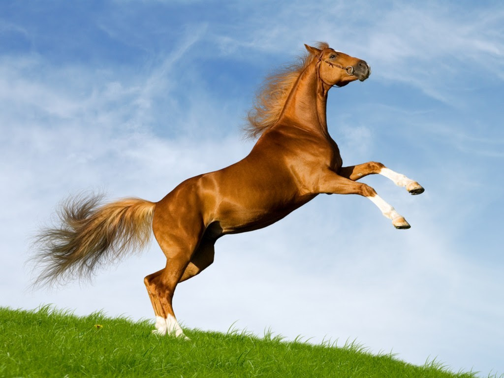 صور حصان بنى