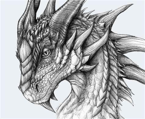 realistic dragon drawings  premium creatives