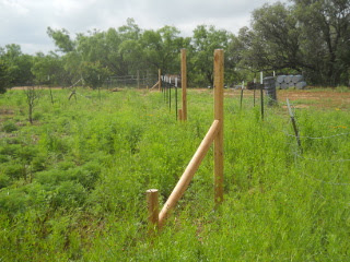 Fence T-posts in Place