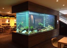 Aquarium Design Specialist Mike Murphy Architectural Designer Underwater Tunnel Large Aquariums