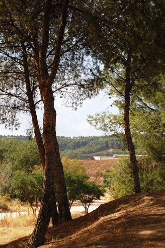 DSC_0406 Antes de la ruta de los tarays
