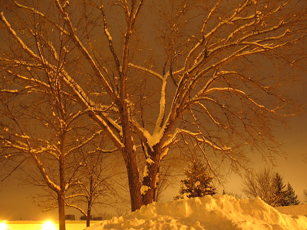 Night time photo of a tree covered with snow, taken in Burnsville, Minnesota.