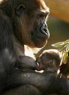 Emozioni nel regno animale anche gli elefanti amano