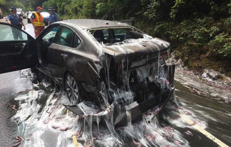 Isto é o que acontece quando um caminhão cheio de peixes-bruxa tomba ao seu lado na estrada 03