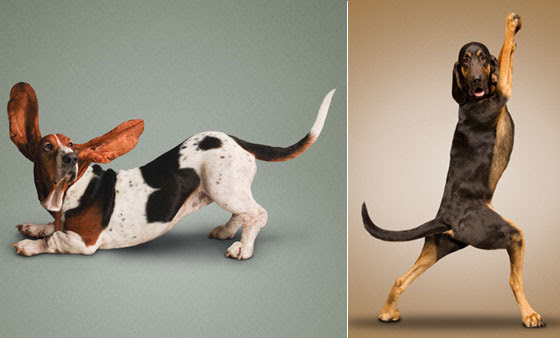 Cute and Funny: Yoga Dogs and Cats, Let's Stretch!