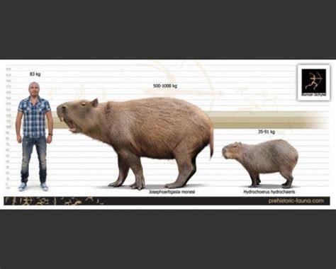 ?????? ?? valentint :: Largest prehistoric animals Vol. 1 Vertebrates part1 Mammals ch. 6