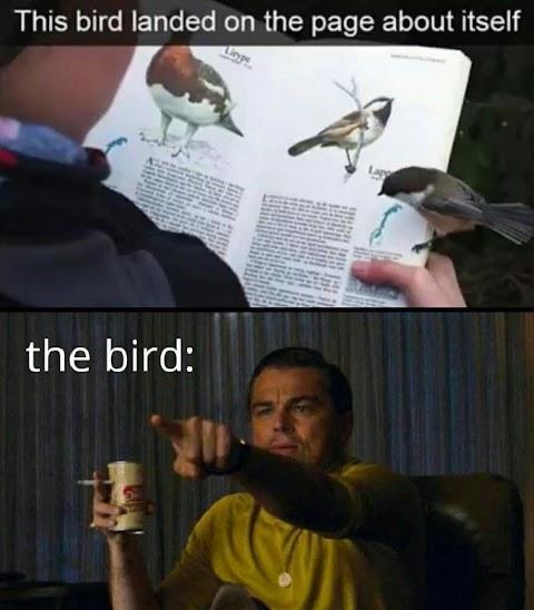Funny Memes Random Picture