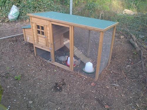 Chicks May 13 2