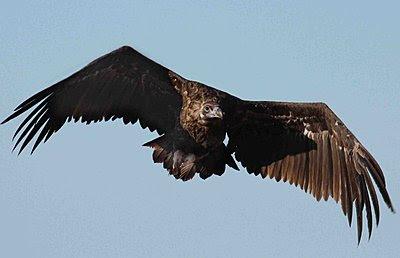 9 Foot Wing Span-img_9356.jpg