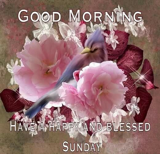 Good Morning Have A Happy And Blessed Sunday Pictures Photos And