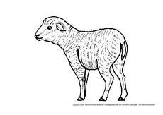 Schafe in der Grundschule - Ausmalbilder - Bildende Kunst ...