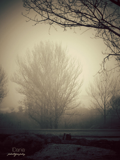 morning fog_1