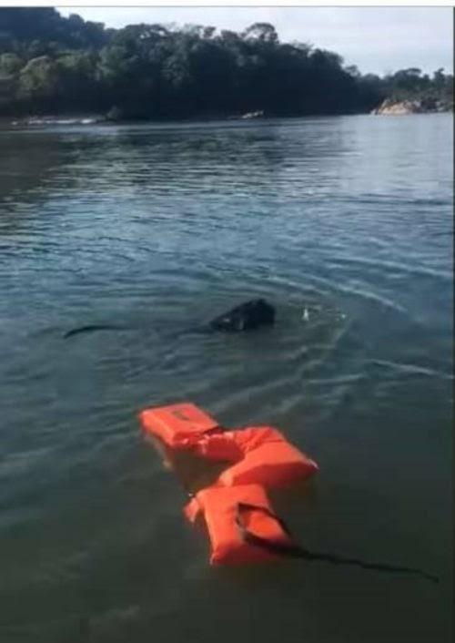 Pescador ve a un extraño animal luchando contra la corriente y se acerca para ayudarlo