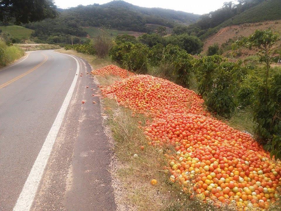 Valor do tomate não compensa pagamento de frete, dizem produtores