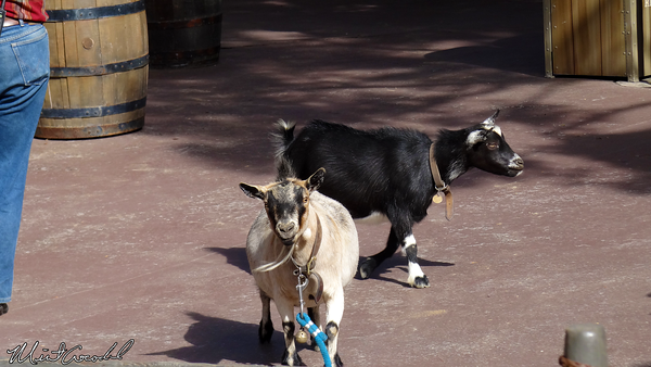Disneyland Resort, Disneyland, Goats