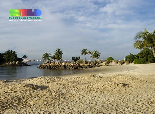 Artificial beach and shore