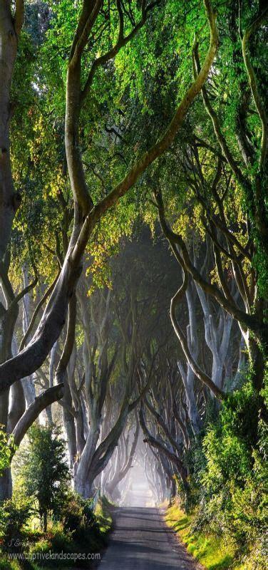 334 best images about Scottish Theme on Pinterest   Plaid