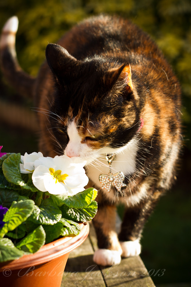 Pepper sniffs flowers