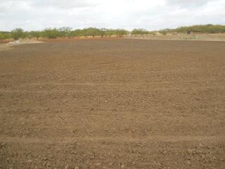 Wheat 2012 Oct 8