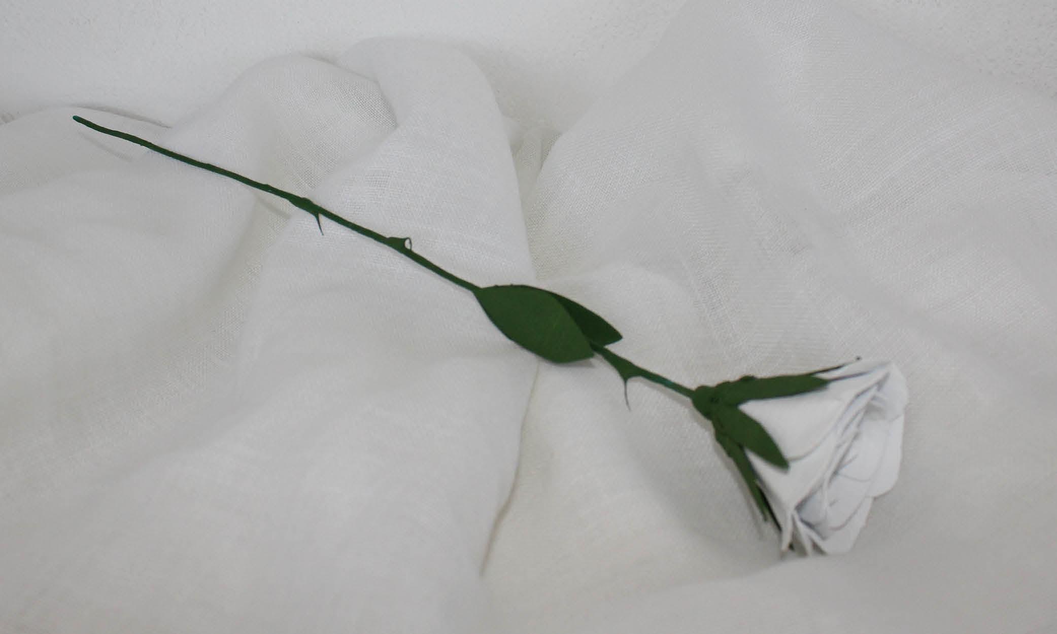 Rosa Blanca Lafundació
