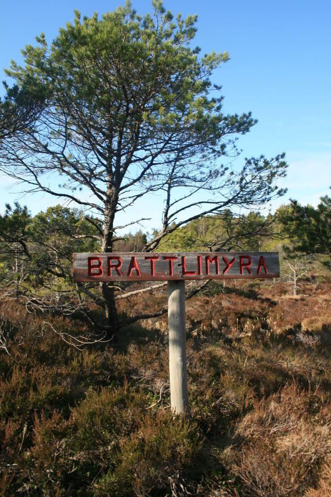 På veg opp til Brandsøyåsen