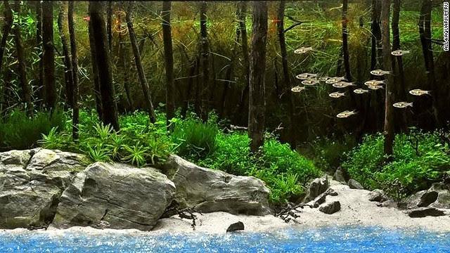 Aquascape Ideas Forest Aquascape Design